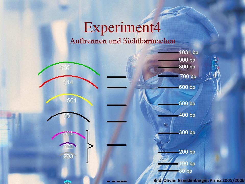 GFP Experimente/Idee Resultate Kosten