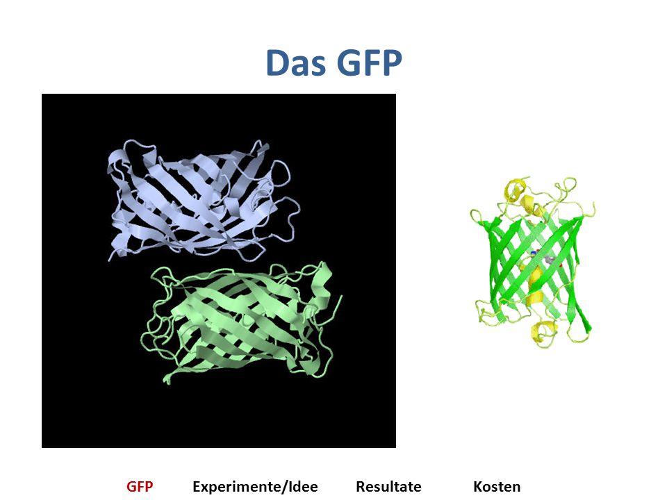 Das GFP GFP Experimente/Idee Resultate Kosten