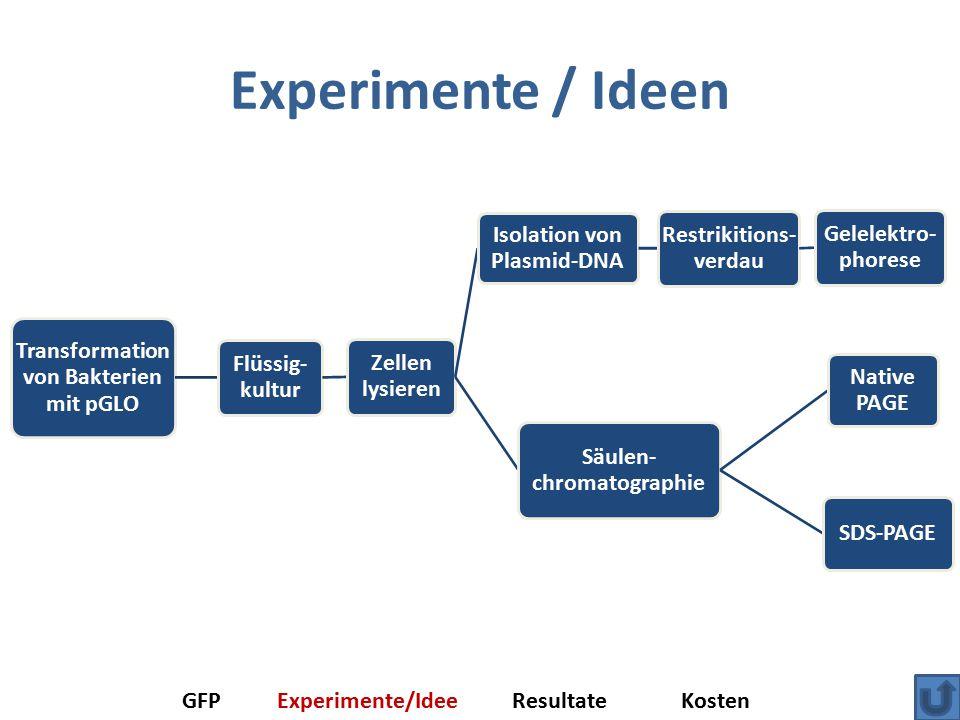 Experimente / Ideen Transformation von Bakterien mit pGLO