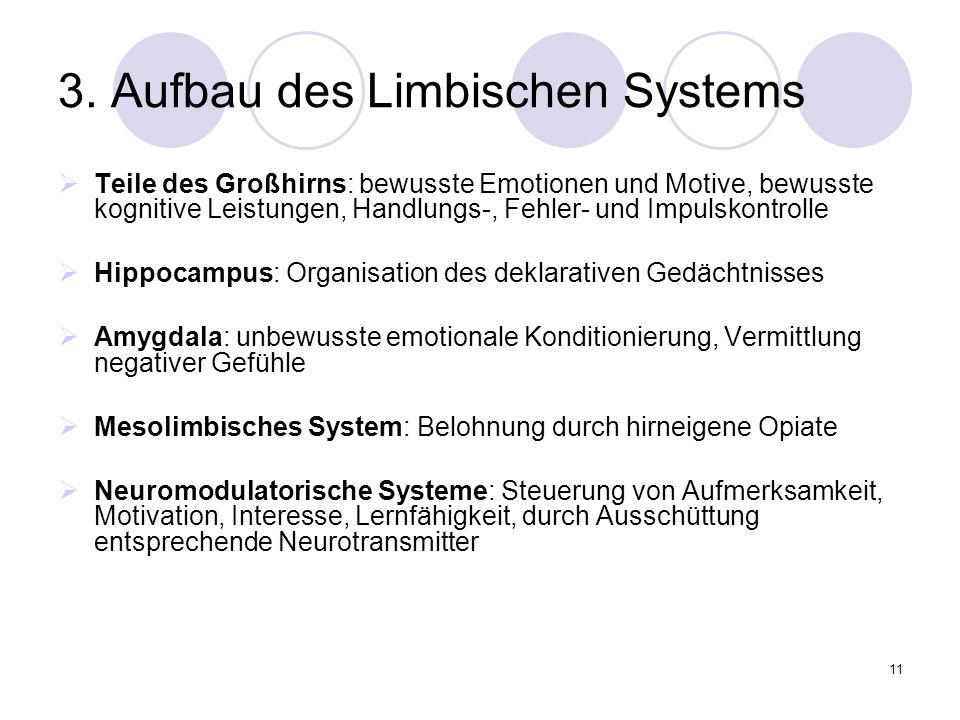 3. Aufbau des Limbischen Systems