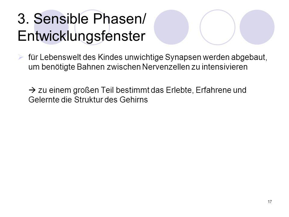 3. Sensible Phasen/ Entwicklungsfenster