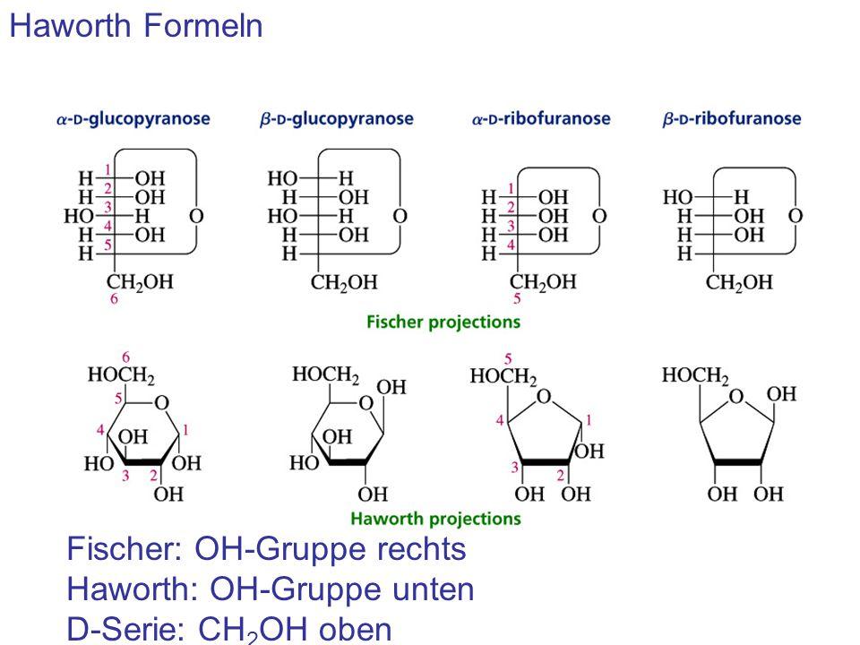 Haworth Formeln Fischer: OH-Gruppe rechts Haworth: OH-Gruppe unten D-Serie: CH2OH oben