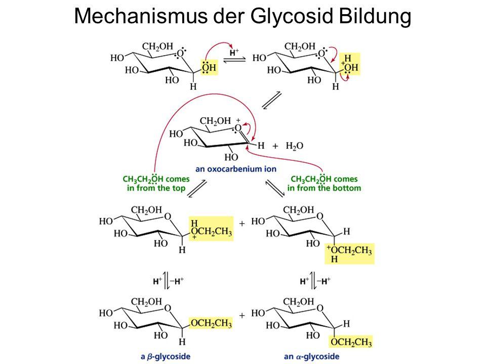 Mechanismus der Glycosid Bildung