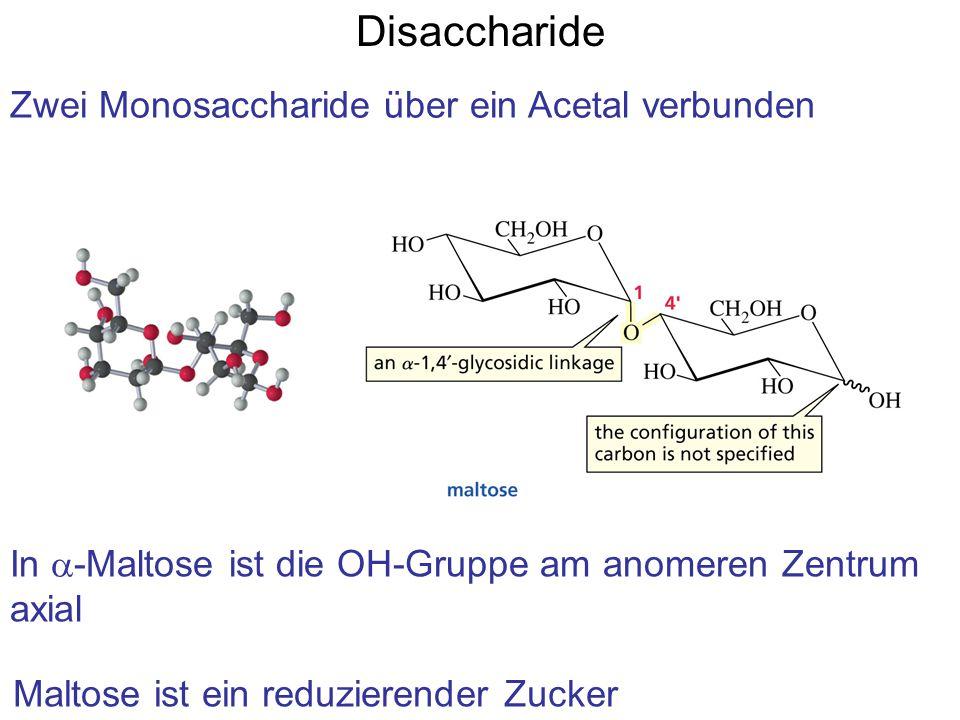 Disaccharide Zwei Monosaccharide über ein Acetal verbunden