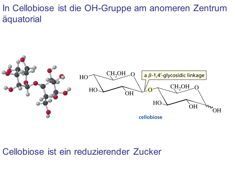 In Cellobiose ist die OH-Gruppe am anomeren Zentrum äquatorial