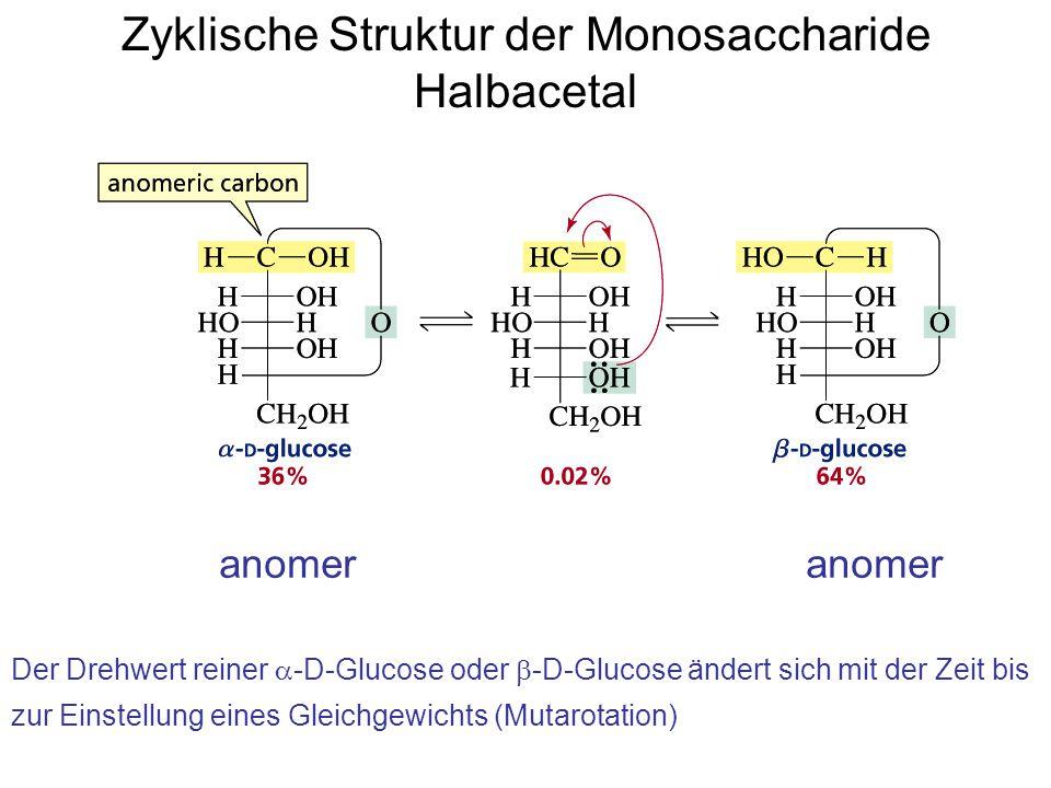 Zyklische Struktur der Monosaccharide Halbacetal