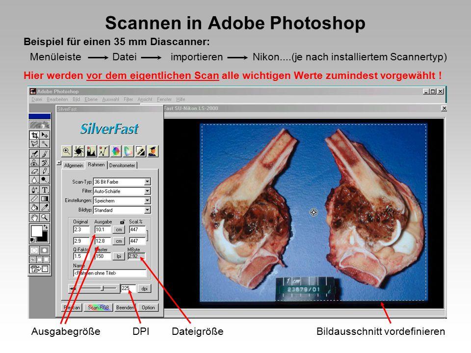 Scannen in Adobe Photoshop