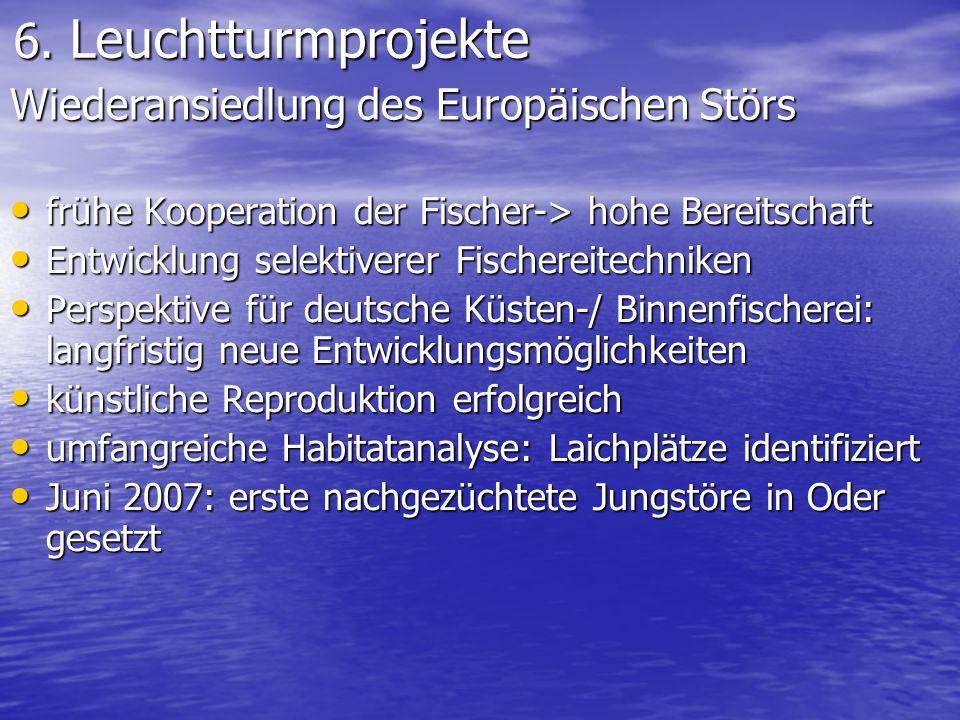 6. Leuchtturmprojekte Wiederansiedlung des Europäischen Störs