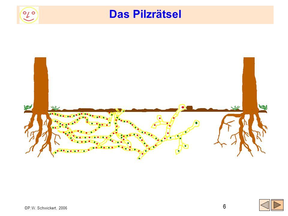 Das Pilzrätsel ©P.W. Schwickert, 2006