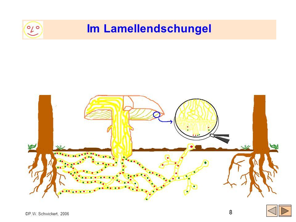 Im Lamellendschungel ©P.W. Schwickert, 2006