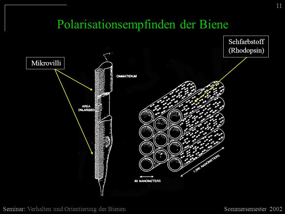 Polarisationsempfinden der Biene