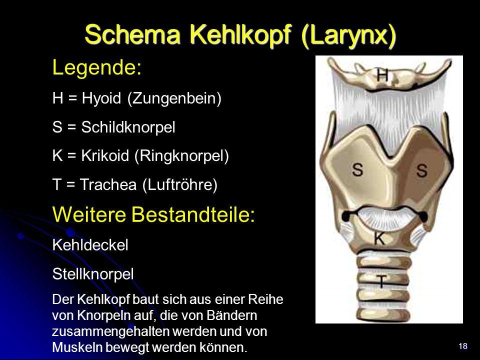 Schema Kehlkopf (Larynx)
