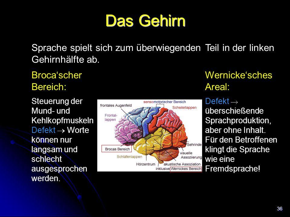 Das Gehirn Sprache spielt sich zum überwiegenden Teil in der linken Gehirnhälfte ab. Broca'scher Bereich: