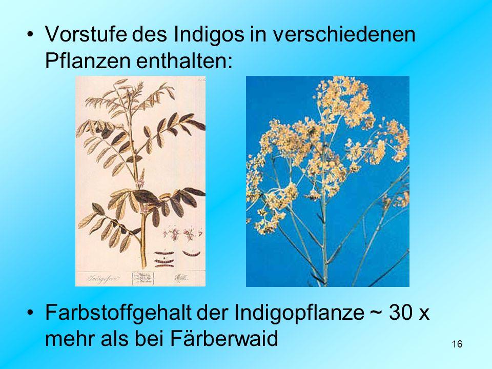 Vorstufe des Indigos in verschiedenen Pflanzen enthalten: