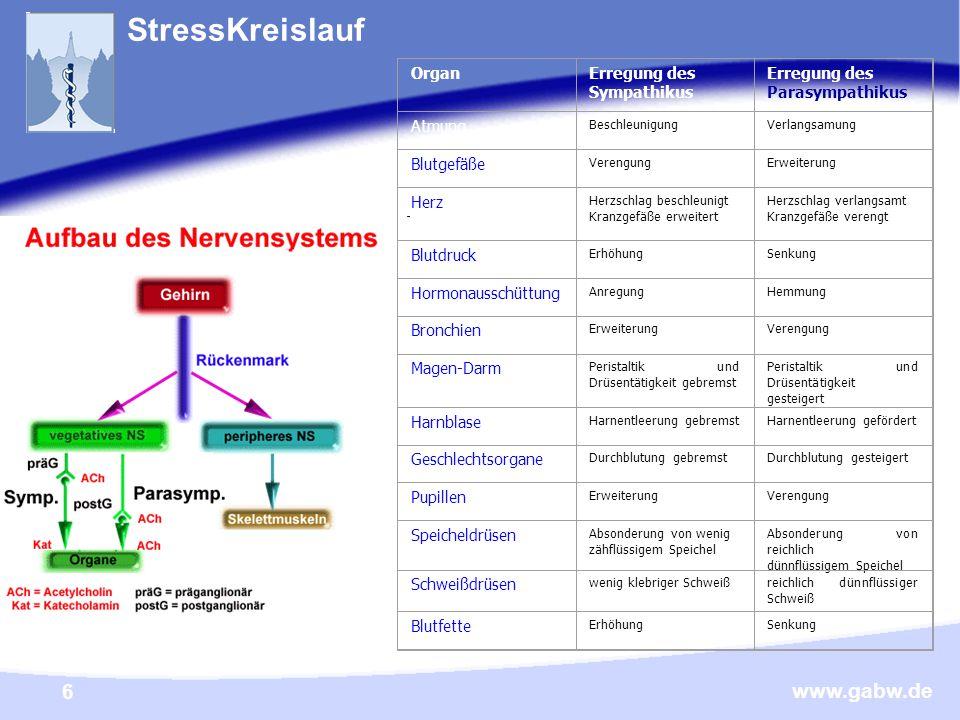 StressKreislauf Organ Erregung des Sympathikus Parasympathikus Atmung