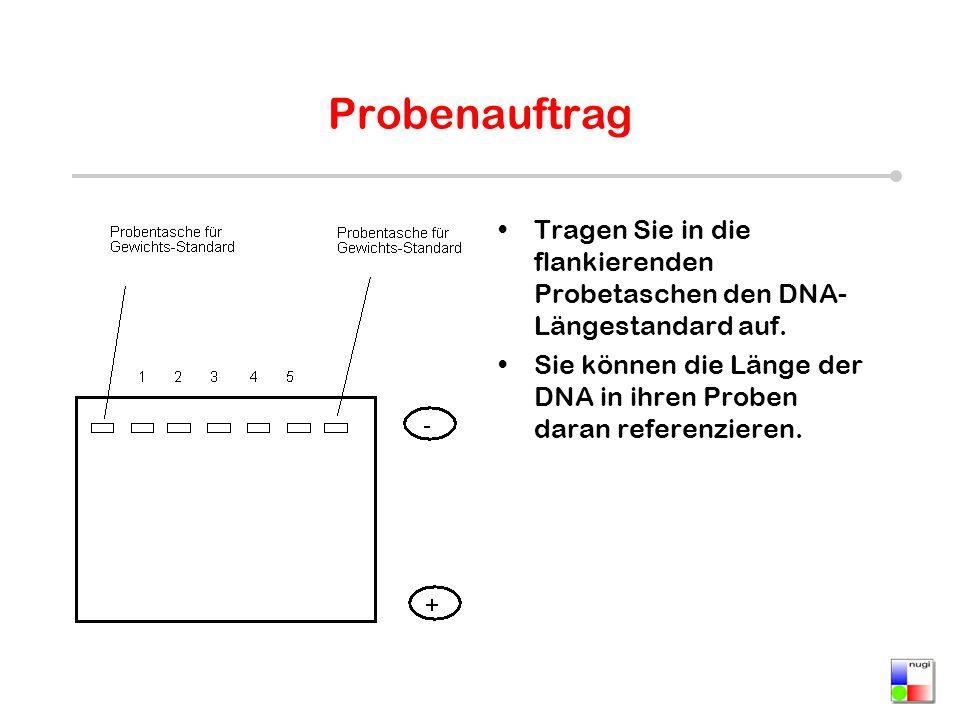 Probenauftrag Tragen Sie in die flankierenden Probetaschen den DNA-Längestandard auf.