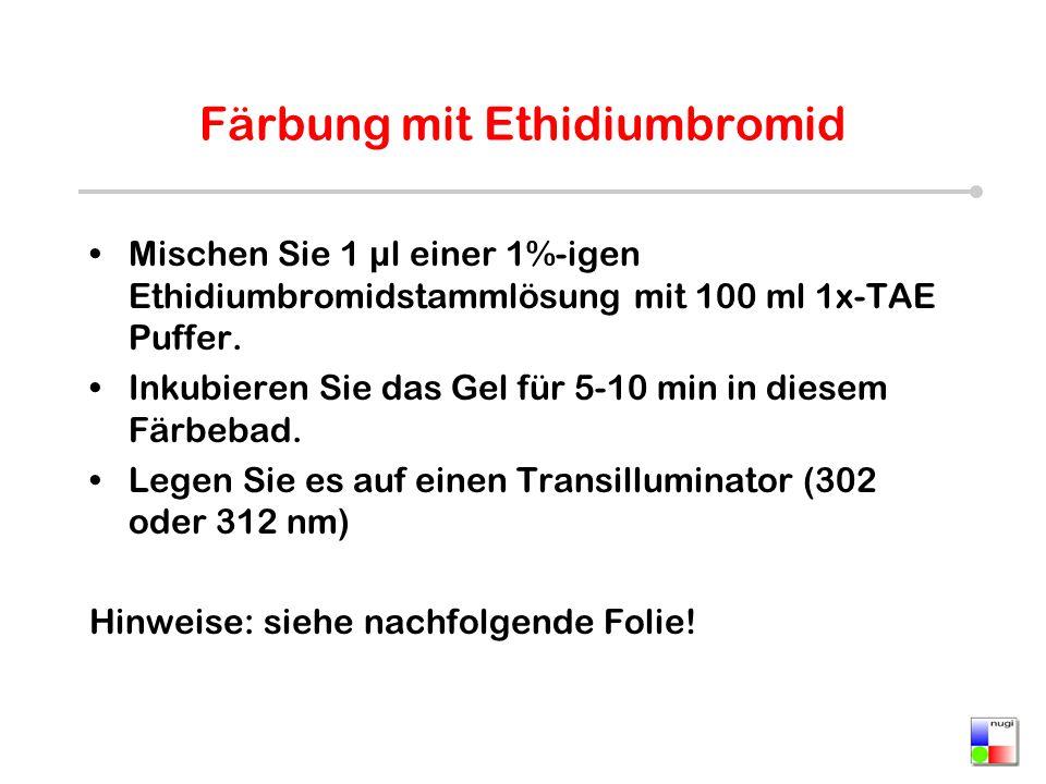 Färbung mit Ethidiumbromid