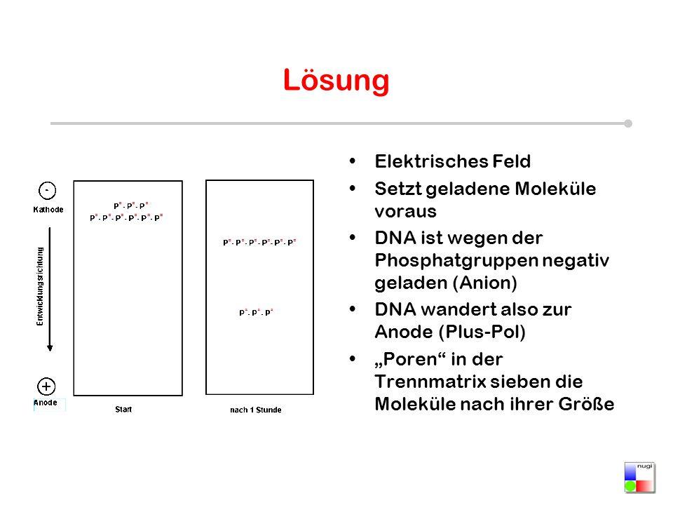 Lösung Elektrisches Feld Setzt geladene Moleküle voraus