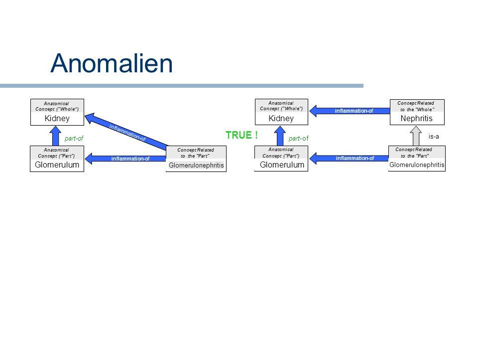 Anomalien TRUE ! Kidney Kidney Nephritis Glomerulum Glomerulum part-of