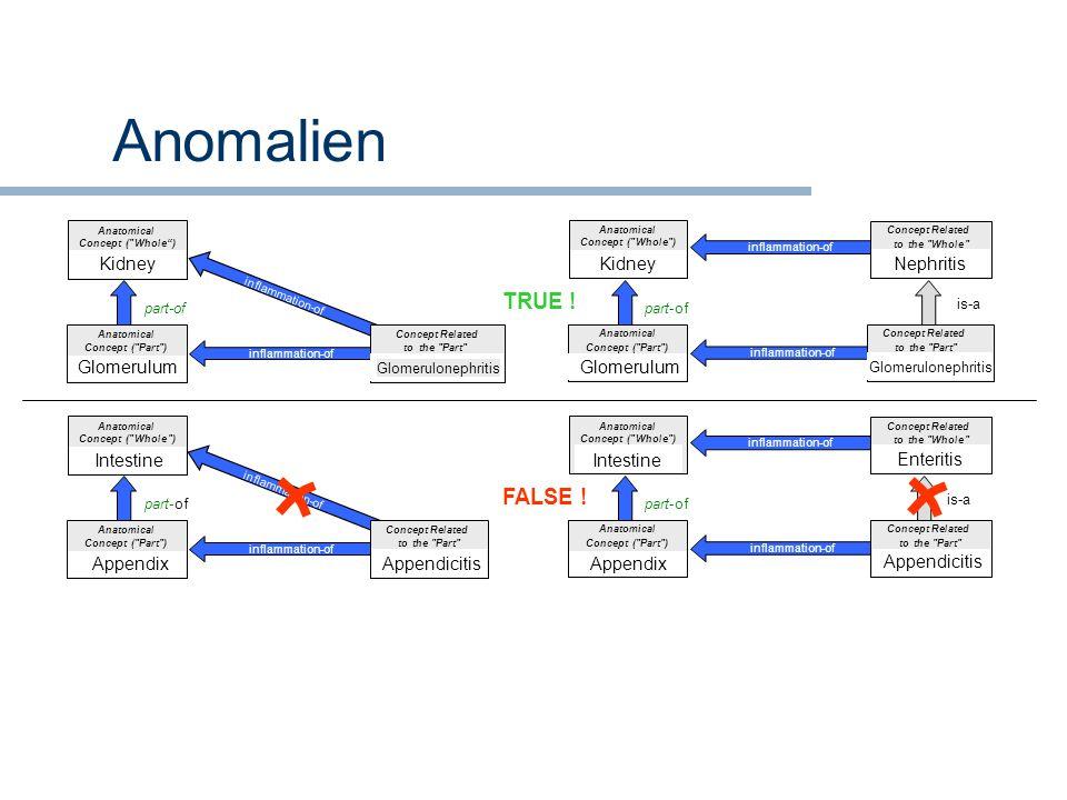 Anomalien TRUE ! FALSE ! Kidney Kidney Nephritis Glomerulum Glomerulum