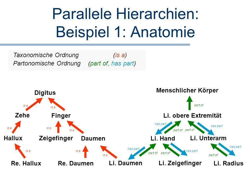 Parallele Hierarchien: Beispiel 1: Anatomie