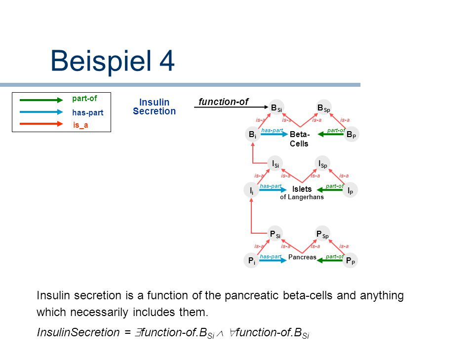 Beispiel 4 part-of. has-part. is_a. Insulin Secretion. function-of. BSi. BSp. is-a. is-a. is-a.