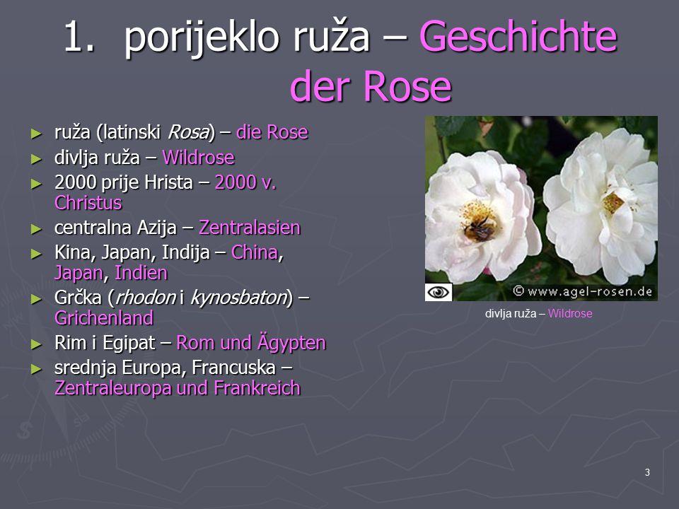 porijeklo ruža – Geschichte der Rose