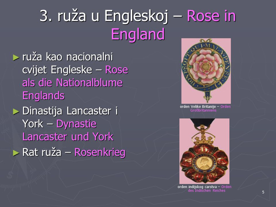 3. ruža u Engleskoj – Rose in England
