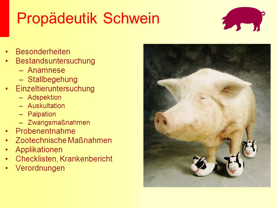 Propädeutik Schwein Besonderheiten Bestandsuntersuchung Anamnese