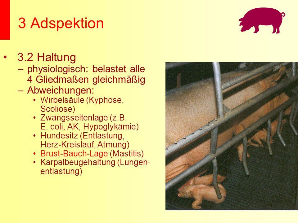 3 Adspektion 3.2 Haltung. physiologisch: belastet alle 4 Gliedmaßen gleichmäßig. Abweichungen: Wirbelsäule (Kyphose, Scoliose)