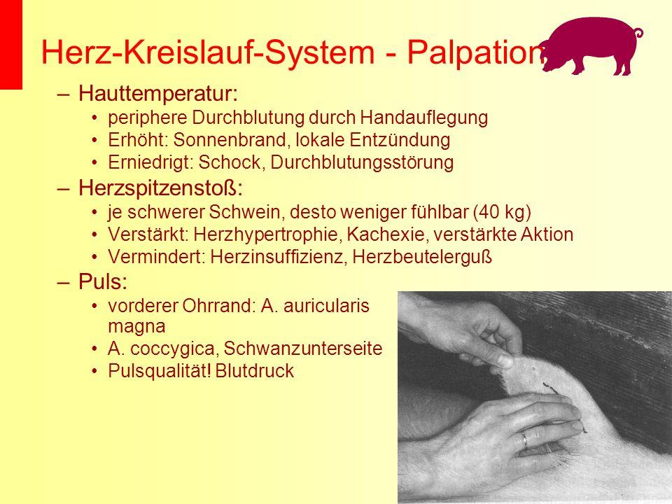 Herz-Kreislauf-System - Palpation