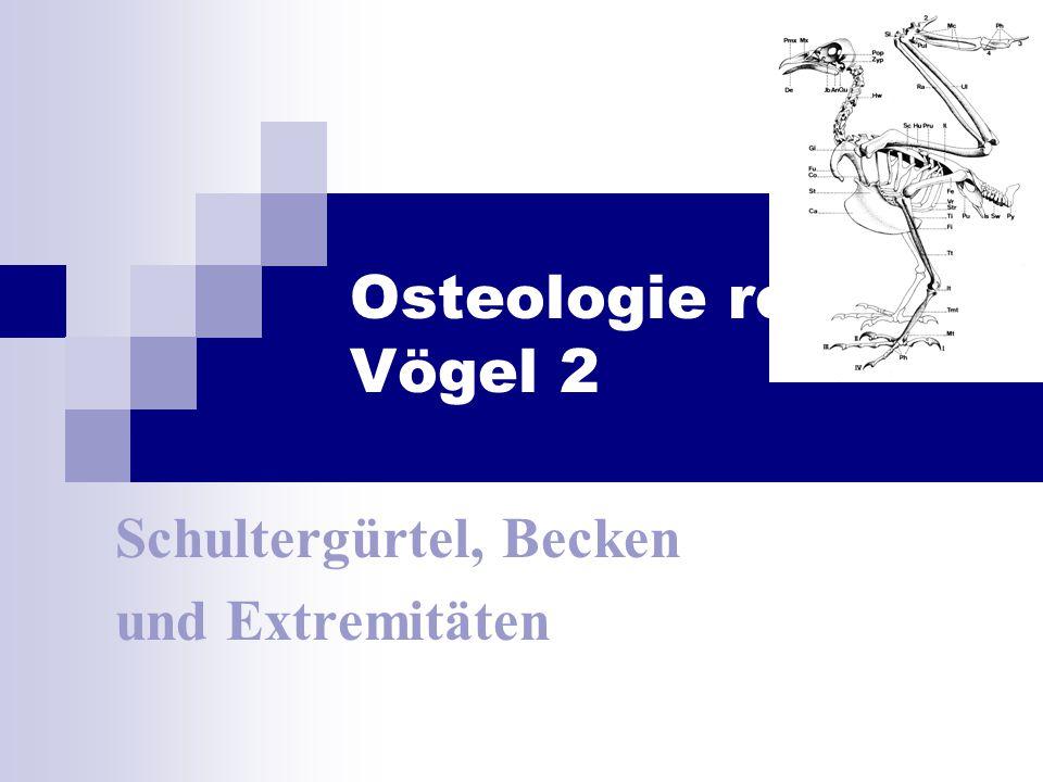 Osteologie rezenter Vögel 2