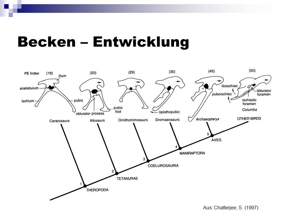 Becken – Entwicklung Aus: Chatterjee, S. (1997)