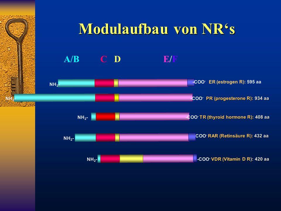 Modulaufbau von NR's A/B C D E/F -COO- ER (estrogen R): 595 aa NH2-