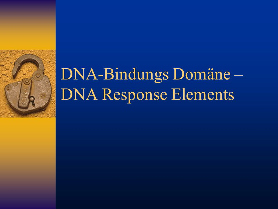 DNA-Bindungs Domäne – DNA Response Elements