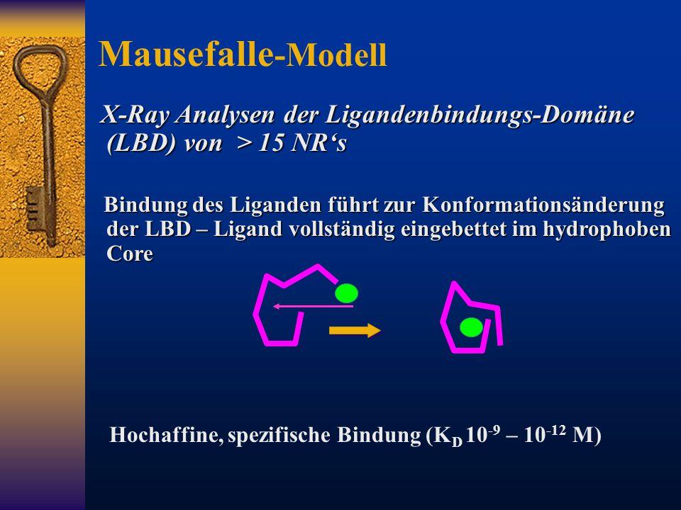 Mausefalle-Modell X-Ray Analysen der Ligandenbindungs-Domäne (LBD) von > 15 NR's.