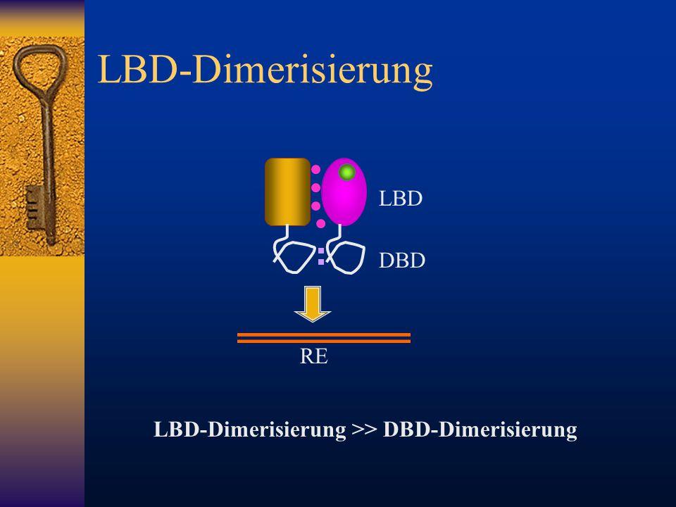 LBD-Dimerisierung LBD DBD RE