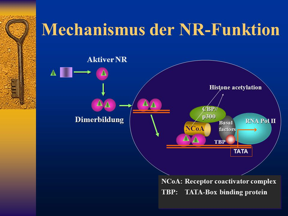 Mechanismus der NR-Funktion
