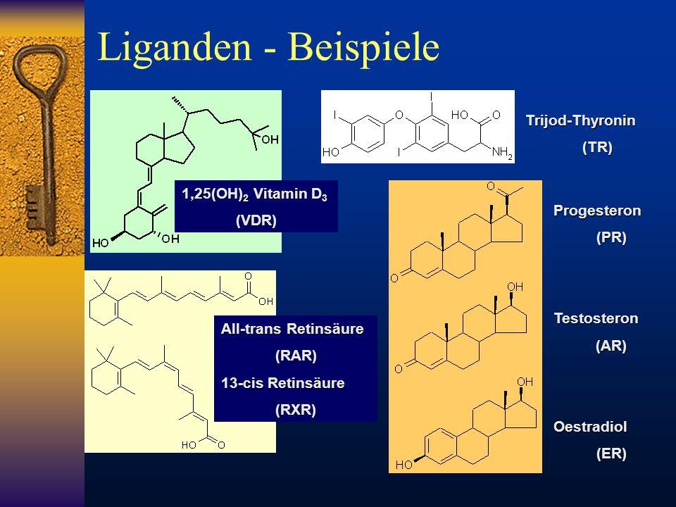 Liganden - Beispiele Trijod-Thyronin (TR) 1,25(OH)2 Vitamin D3 (VDR)