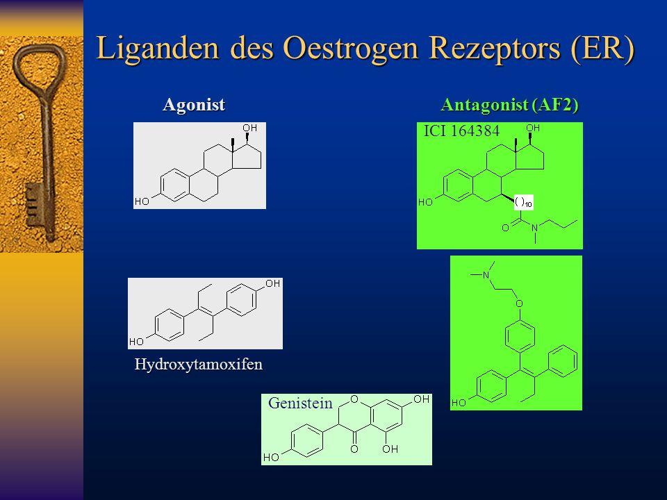 Liganden des Oestrogen Rezeptors (ER)