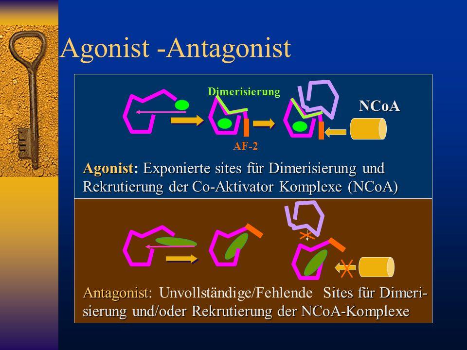 Agonist -Antagonist NCoA
