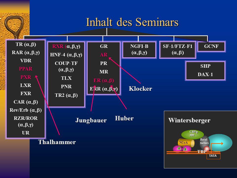 Inhalt des Seminars Klocker Thalhammer Huber Jungbauer Wintersberger