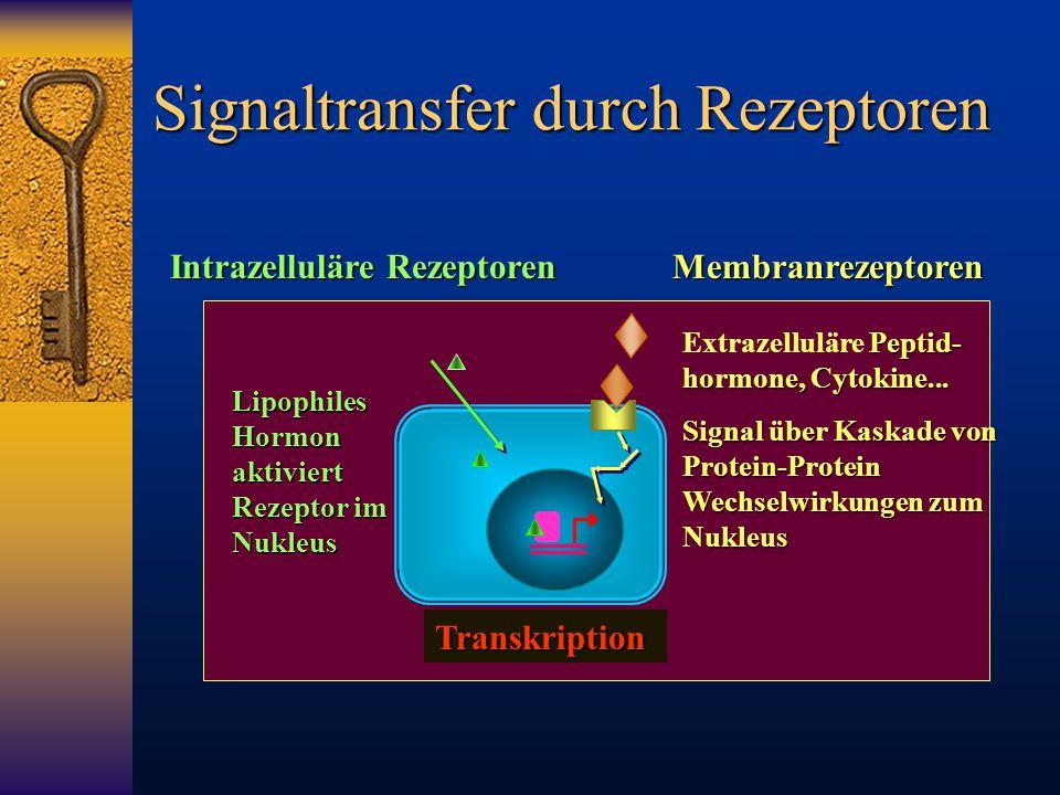 Signaltransfer durch Rezeptoren