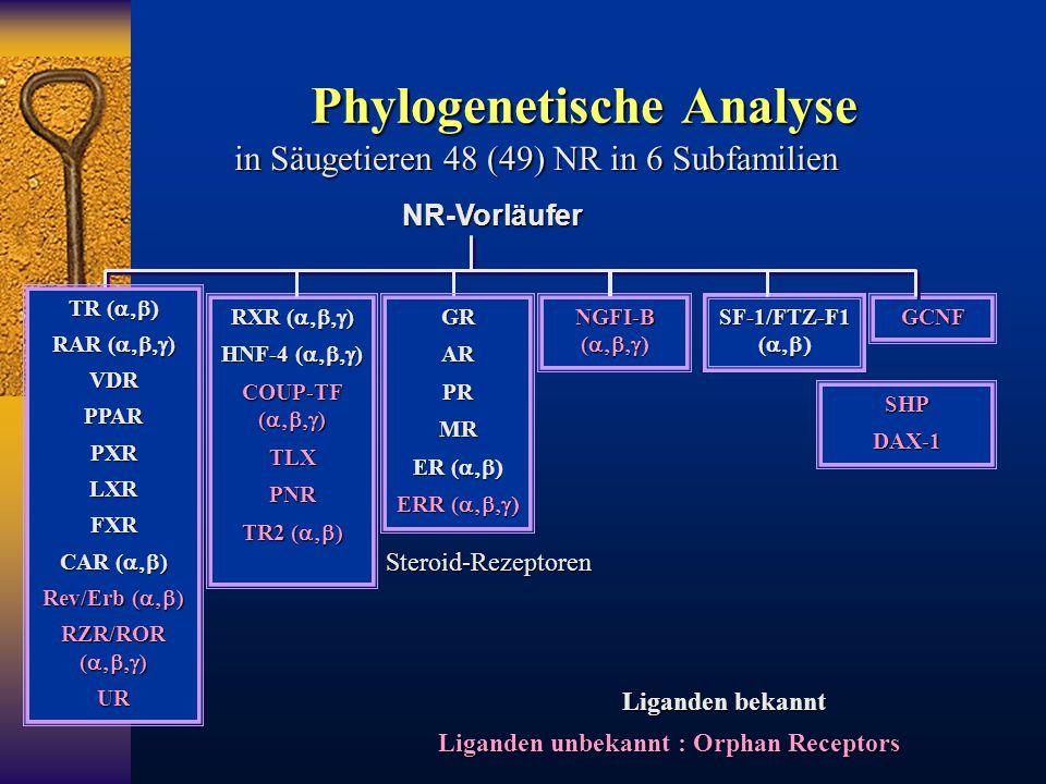 Phylogenetische Analyse