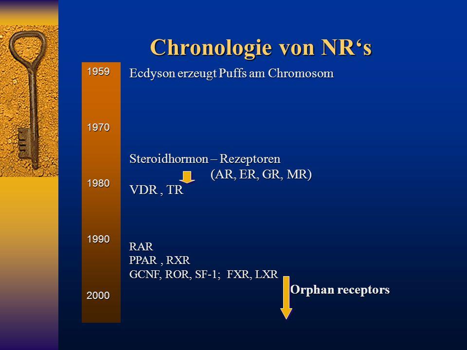 Chronologie von NR's Ecdyson erzeugt Puffs am Chromosom