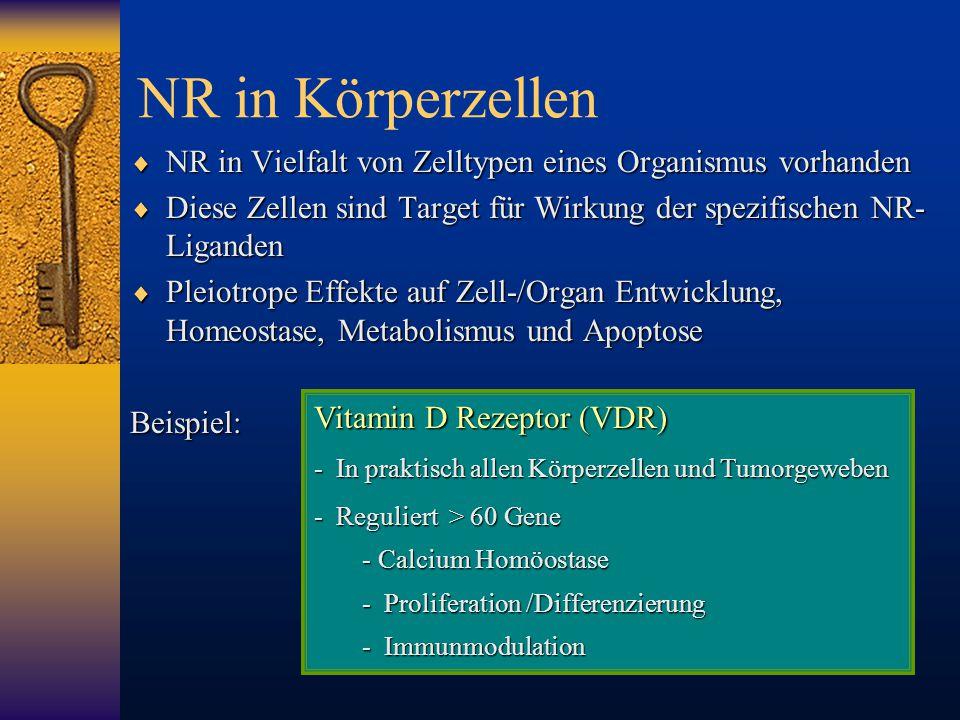 NR in Körperzellen NR in Vielfalt von Zelltypen eines Organismus vorhanden. Diese Zellen sind Target für Wirkung der spezifischen NR-Liganden.