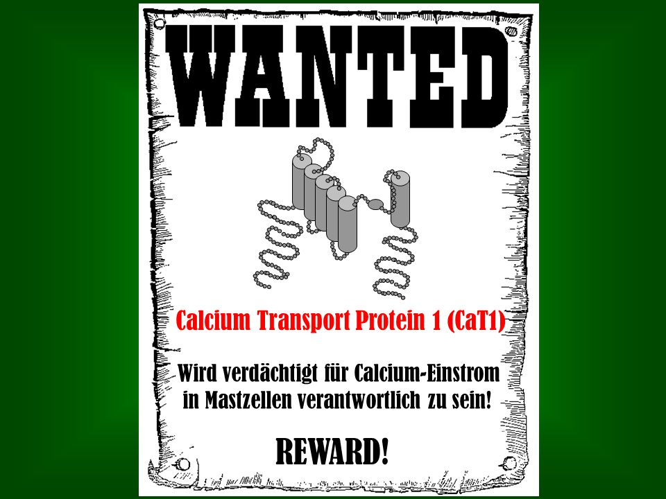 REWARD! Calcium Transport Protein 1 (CaT1)