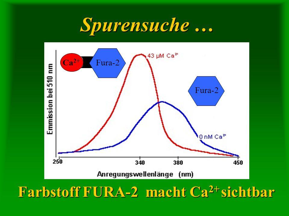 Spurensuche … Farbstoff FURA-2 macht Ca2+ sichtbar Ca2+ Fura-2 Fura-2