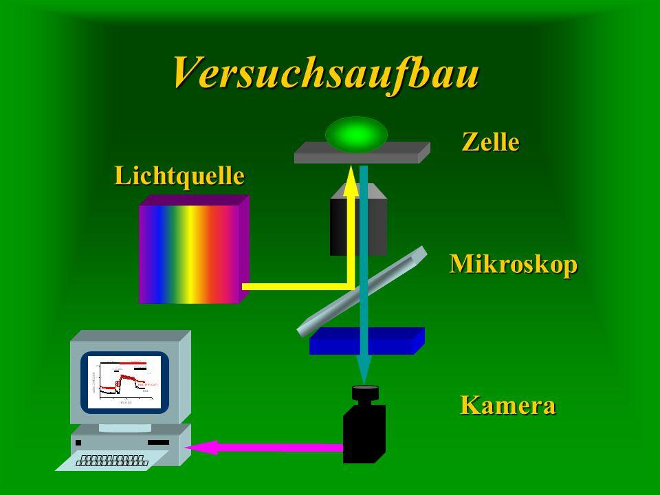 Versuchsaufbau Zelle Lichtquelle Mikroskop Kamera