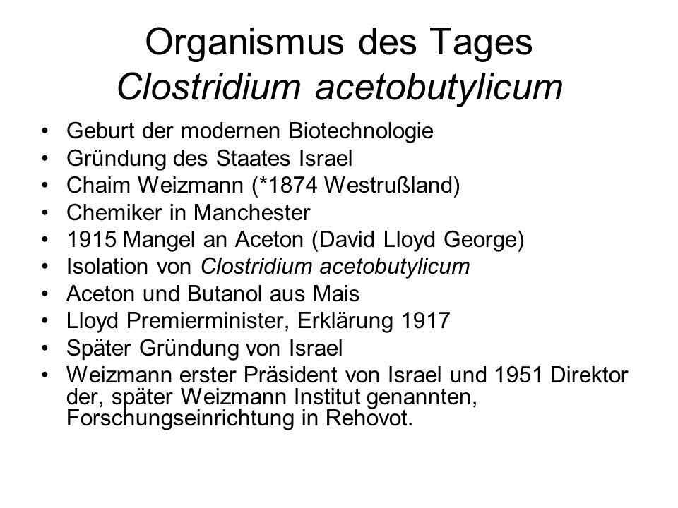 Organismus des Tages Clostridium acetobutylicum